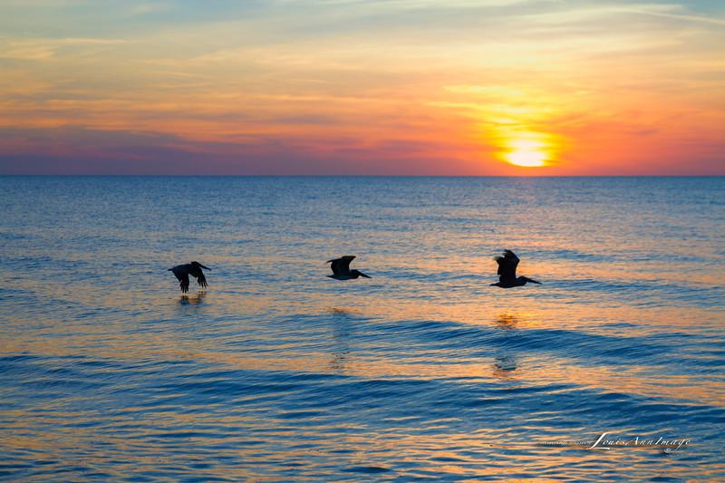 By the sea - Anna Maria Island, Florida