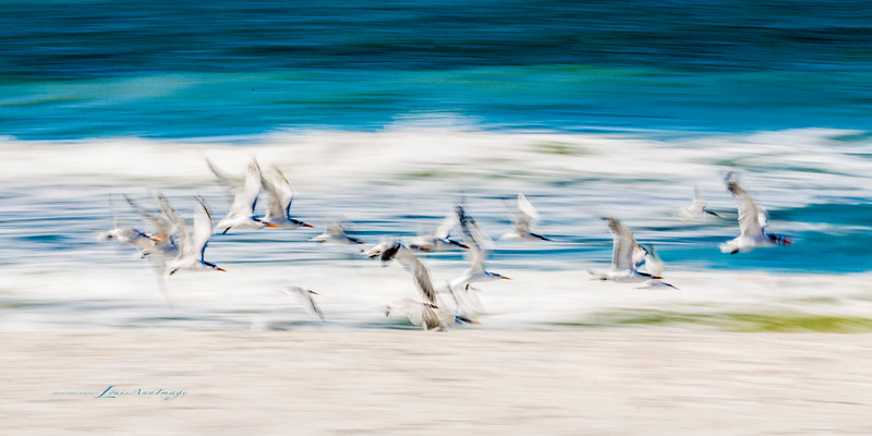 'Into the Wind...'<br /> By the sea - Anna Maria Island, Florida