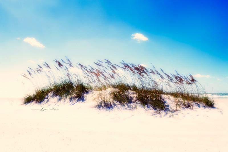 'Wind...'<br /> By the sea - Anna Maria Island, Florida