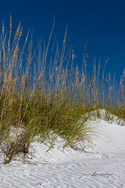 'Waves of Sand...'<br /> Dunes ~ Sea Oats<br /> Anna Maria Island, Florida