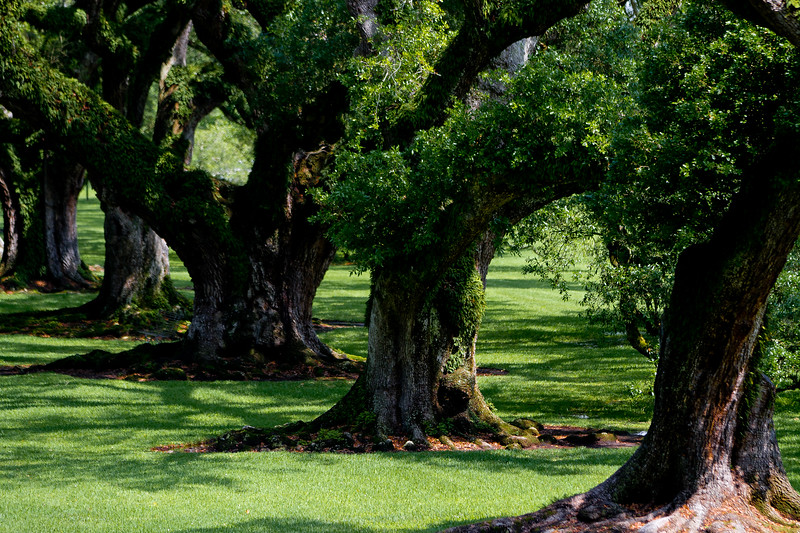 "Located on the Mississippi River between the historic Louisiana cities of New Orleans and Baton Rouge, Oak Alley Plantation has been called the ""Grande Dame of the Great River Road"". Images from the Gardens, the interior and grounds.. Another marvelously maintained step back into Louisiana's storied past.."