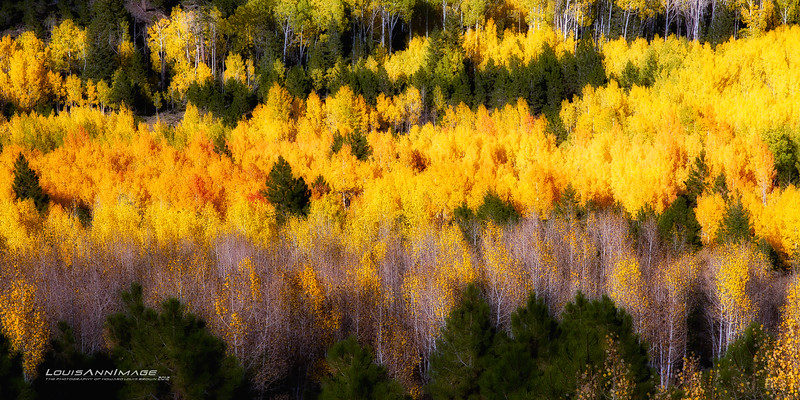 """Aspen Grove, Dixie National Forest, Utah<br /> See More of Arizona & Utah - """"The Southwestern Sun' here: <a href=""""http://smu.gs/RfQCCf"""">http://smu.gs/RfQCCf</a>"""