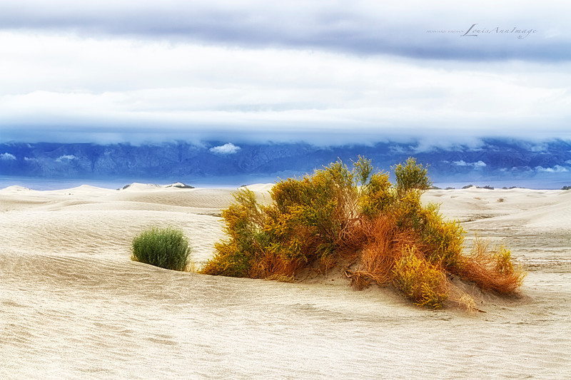 Desert Garden ~ Mesquite Dunes, Stovepipe Wells, Death Valley National Park.