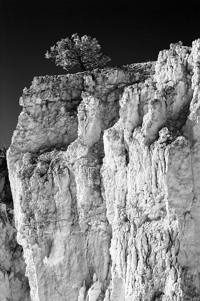 "Contri date: 7-22-10 We are so small in comparison to the wonder of ""Creation..""  Lone Pine looking south from Sunset Point. Infrared rendering. Bryce Canyon, Utah."
