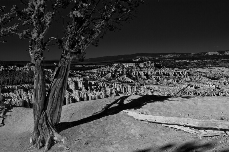 Canyon Rim. Bryce Canyon, Utah.