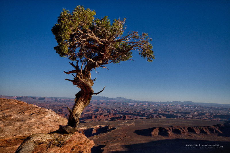 """Juniper on the edge..  Canyonlands, NP<br /> See More of Arizona & Utah - """"The Southwestern Sun' here: <a href=""""http://smu.gs/RfQCCf"""">http://smu.gs/RfQCCf</a>"""