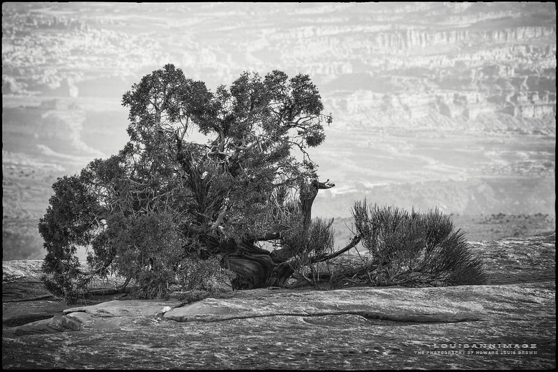 Ancient Juniper #2 <br /> White Rim, Island in the Sky - Canyonlands National Park, Utah. Another previously unpublished image from the American Southwest. Canon 7D ~ EF70-200mm f/2.8L IS II USM @ 135.0 mm, 1/200 s @ f/9.0, ISO 200.
