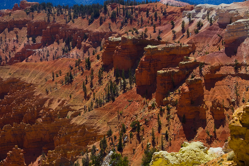 The Fins and Walls at Cedar Breaks are eroding towards the HooDoo formations you can see at the far points of this image.  Cedar Breaks is a younger amphitheater canyon similar to an earlier Bryce.. Cedar Breaks National Monument, Utah.