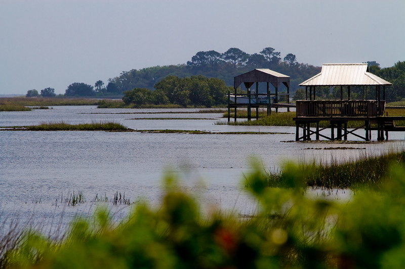 Cedar Key Salt Marsh..