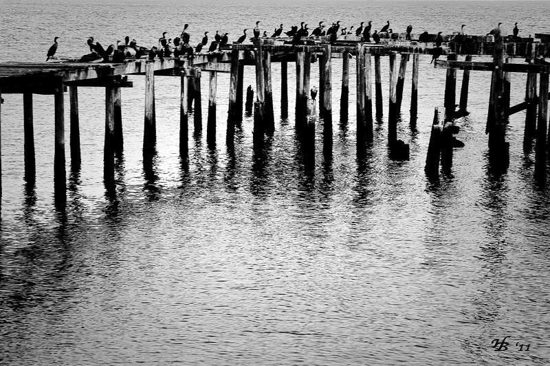 Evening Perch.. Dock Street - Cedar Key.