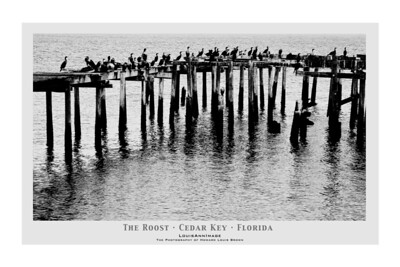 Contri Date: March 31, 2011 - Cormorants and Pelicans roost on abandoned pilings off Dock Street. Cedar Key, Florida.  Visit our Cedar Key Gallery at:  http://www.louisannimage.com/Travel/Our-America/Cedar-Key-Old-Floridas-Big/ Thanks,  HB