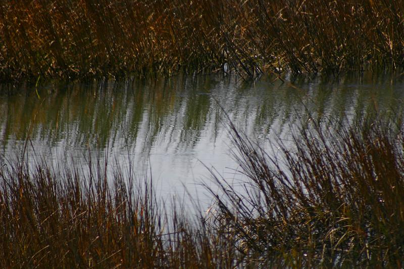 Reflections - Grass Marsh - Shem Creek, Mount Pleasant, South Carolina Shem Creek, Mt Pleasant, SC