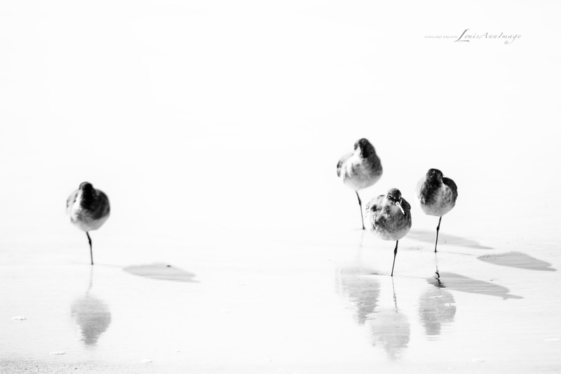 'It only takes one...' <br /> Leg that is... Pipers by the sea - Anna Maria Island, Florida