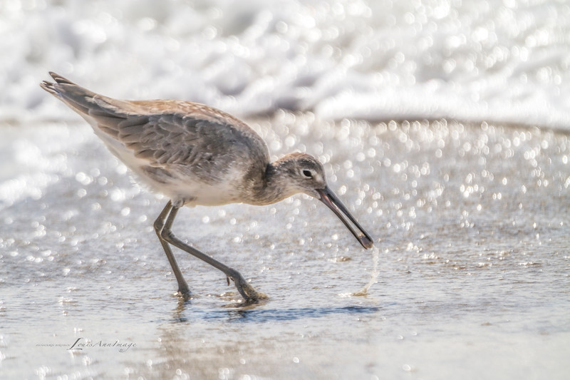 """""""Piper's Meal...'<br /> By the sea - Anna Maria Island, Florida"""