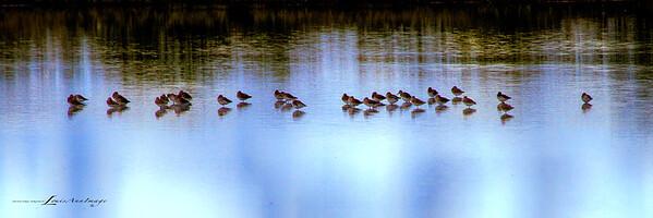 Piper Line - Merritt Island National Wildlife Refuge, Florida