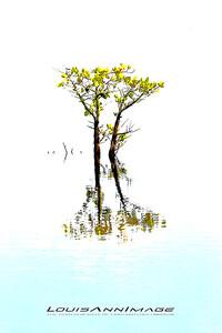 Lone Mangrove - Merritt Island National Wildlife Refuge, Florida