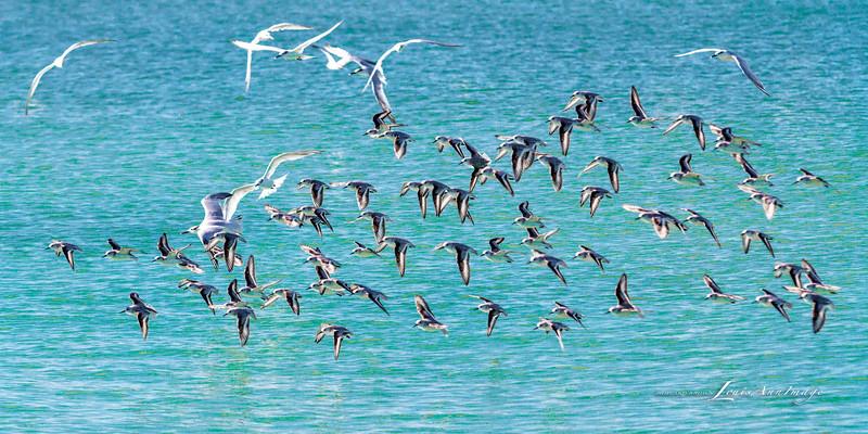 'Flight...'<br /> By the sea - Anna Maria Island, Florida