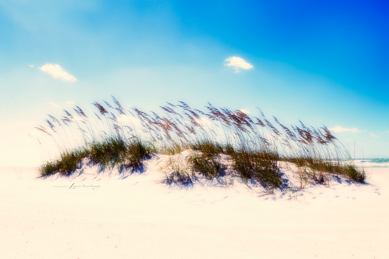 'Wind...'<br /> By the sea - Anna Maria Island, Florida