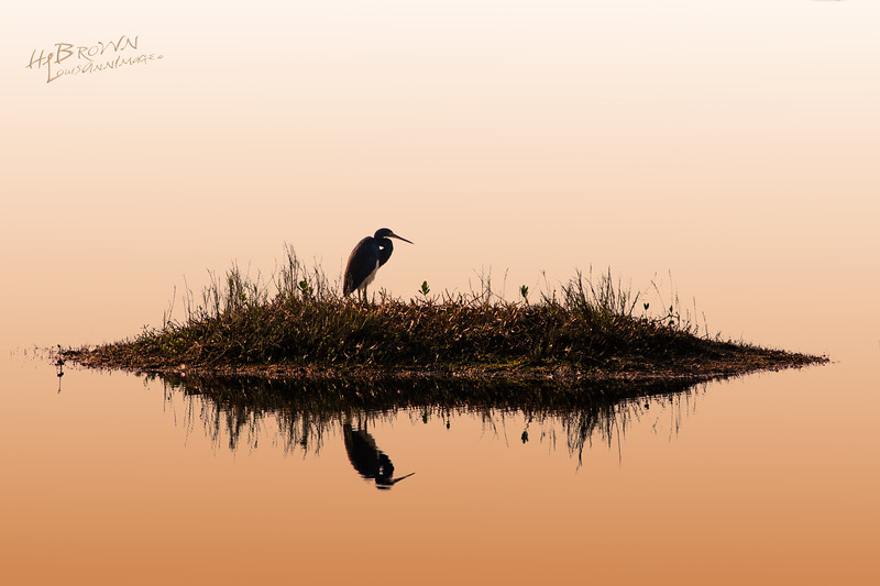 'Before the day...'  A Tricolored Heron ponders beginning the daily hunt.  Merritt Island Wildlife Refuge, Florida. Canon 7D, EF70-200mm f/2.8L IS II USM +2.0x, 292mm, 1/60 s @ f/14, ISO 100
