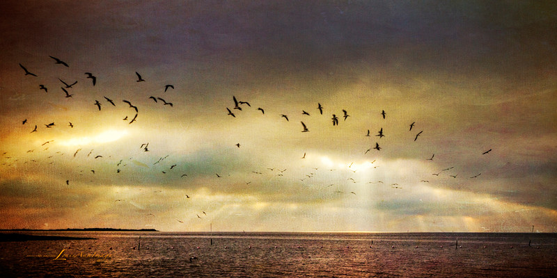 Aloft in Morning Light...