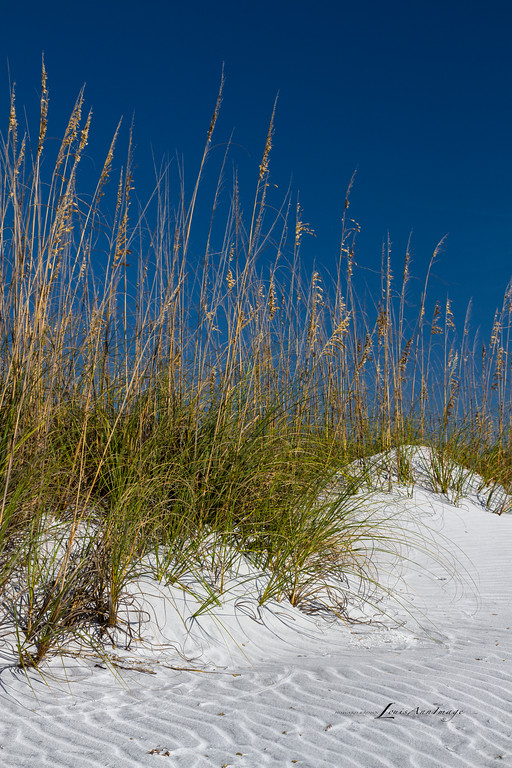 'Waves of Sand...'<br /> Dunes ~ Sea Oats<br /> Anna Maria Island, Florida