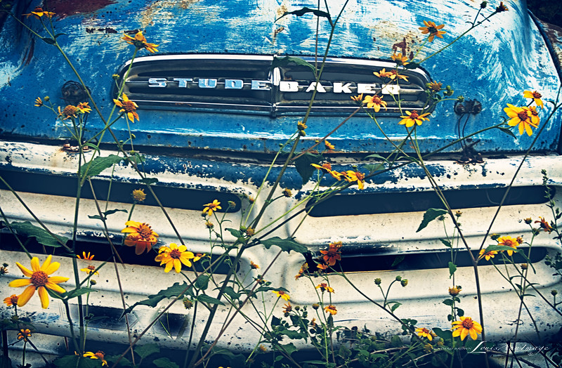 'Baby Blue...' Studebaker Pickup - Gold King Mine  & Ghost Town, Jerome, Arizona.