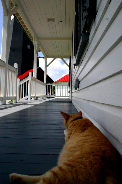 """Watch Cat"" - The Light at Tybee Island, Georgia."