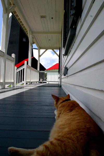"""Watch Cat"" - The Light at Tybee Island, Georgia."