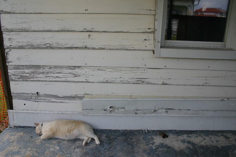 """Porch Cat"" - Lighthouse, Tybee Island, Georgia"