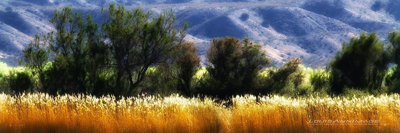 Golden Fields - Oasis in the Desert, Bosque del Apache NWR, NM