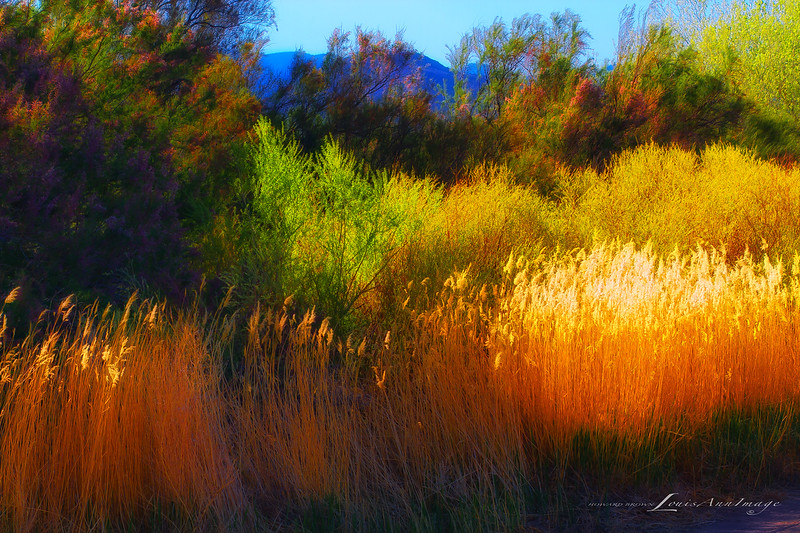God's Palatte - The brilliance of an afternoon sun illuminates the edge of the desert - Bosque del Apache National Wildlife Refuge, West Central New Mexico.