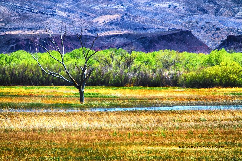 Desert Oasis, Bosque del Apache NWR, NM