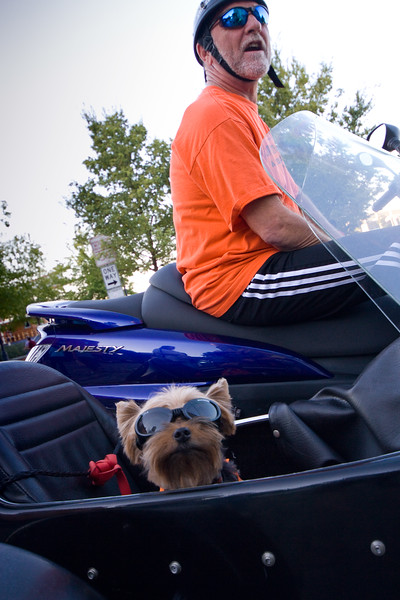 "Contri Date: November 15, 2010 - Sidecar Co-pilot - Halloween, 2010 - River Street, Savannah, Georgia<br /> <br /> Yorkies are our favorite breed.  We've had two wonderful friends over the last 17 years now - one is still with us..  Seems that they just adapt to any lifestyle, anywhere..  This handsome fellow - sporting his ""Doggles"" heads out with his human ""chauffeur"" for an evening of fun - Sidecar style - on Halloween.  <br /> <br /> Over the Halloween weekend, we took a mini-vacation to Savannah in celebration of Red's 55th.  Thought I'd share a few of our images from a wonderfully traditional southern city filled with the sights and flavors of a slower paced, friendlier life than we are used to.  <br /> <br /> I plan on posting even more to our Savannah Gallery at:  <a href=""http://www.louisannimage.com/Travel/Our-America/Savannah-Tybee-Island/9920778_5iZRZ#1079811381_mVGib"">http://www.louisannimage.com/Travel/Our-America/Savannah-Tybee-Island/9920778_5iZRZ#1079811381_mVGib</a>"
