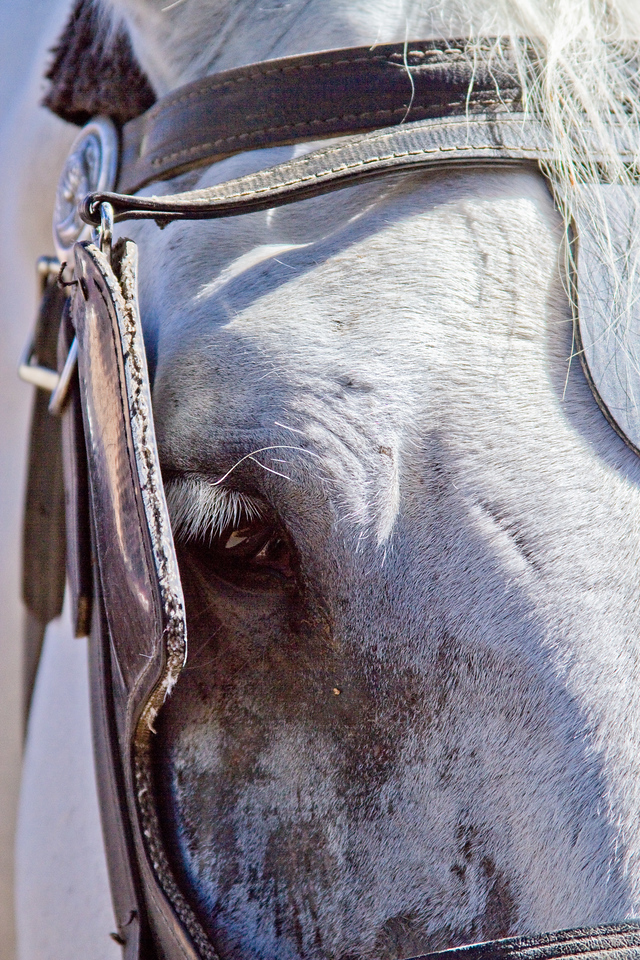 "Contri Date: November 8, 2010 - The Eye of Sadness... One of a pair of Draft Horses, (I think they were Percheron's) stood awaiting the next fare, pulling Savannah carriage tours.  Hidden behind blinders, this magnificent animal's eyes told a story.  A tale spanning hundreds, if not thousands of miles - through four seasons year end year out - pacing the streets of Savannah, providing entertainment to a countless hoard of tourists.  Wouldn't they rather be somewhere else? Makes ya think...<br /> Visit our Savannah Gallery at: <a href=""http://www.louisannimage.com/Travel/Our-America/Savannah-Tybee-Island/9920778_5iZRZ#676541846_o5HMw"">http://www.louisannimage.com/Travel/Our-America/Savannah-Tybee-Island/9920778_5iZRZ#676541846_o5HMw</a>"