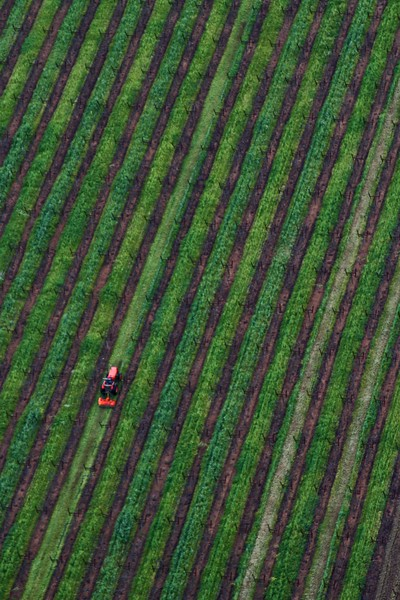 """""""Vineyard Trim"""" - Early Spring in the Napa and Alexander Valleys - Some views from aloft a Hot Air Balloon, others among the pruned vines just at bud break. The valley floor, afire in floral Mustard and wild flowers is a wonderful palate before the lens. This is truly God's country."""