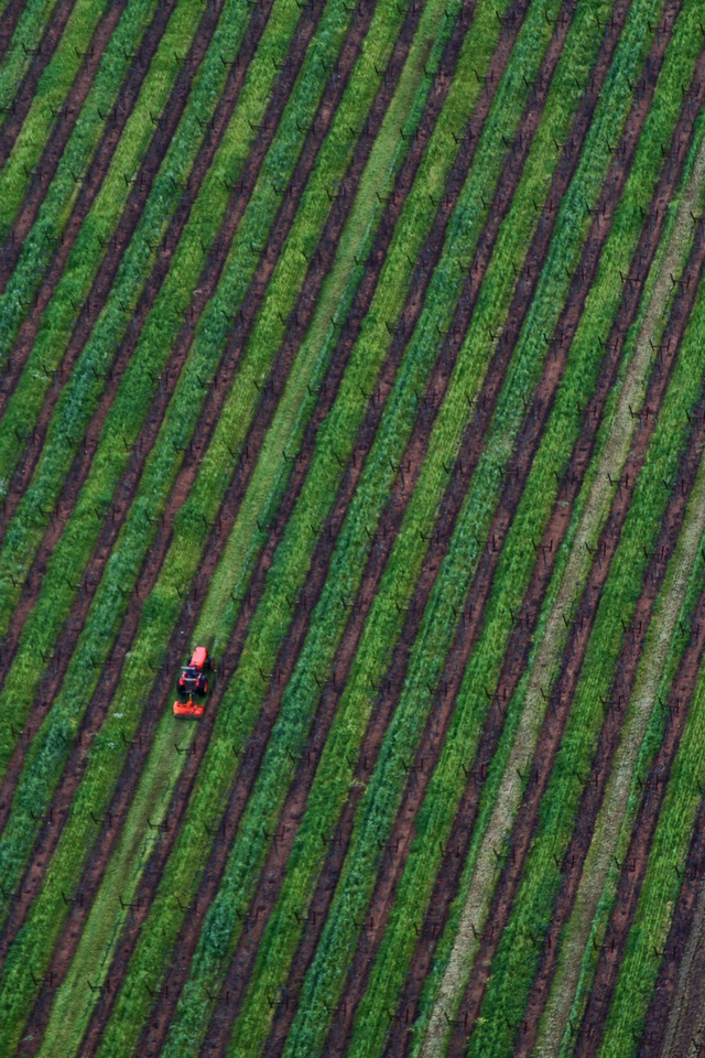 """Vineyard Trim"" - Early Spring in the Napa and Alexander Valleys - Some views from aloft a Hot Air Balloon, others among the pruned vines just at bud break. The valley floor, afire in floral Mustard and wild flowers is a wonderful palate before the lens. This is truly God's country."