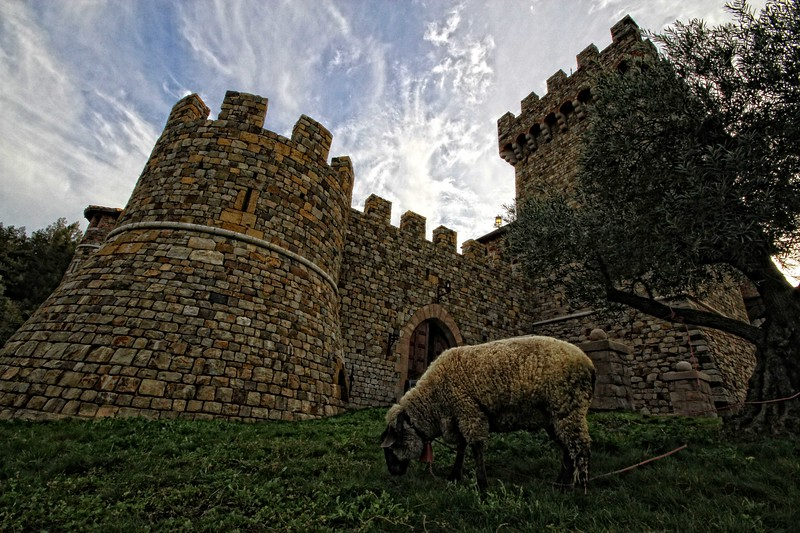 "Boy am I enjoying this 10-20 Sigma...!  ""Castello di Amorosa""  - Early Spring in the Napa Valley."