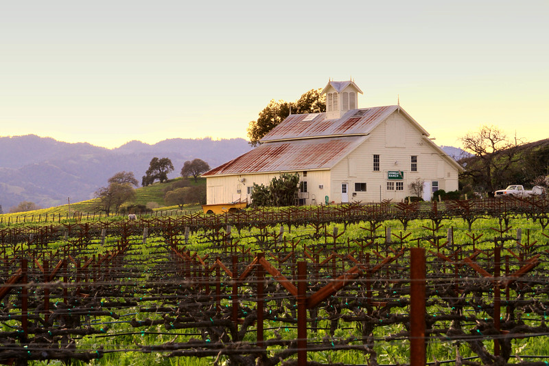 """""""Central Valley at Dusk"""" - Early Spring in the Napa Valley.  The pruned vines are just at bud break. The valley floor, afire in floral Mustard and wild flowers is a wonderful palate before the lens. This is truly God's country."""