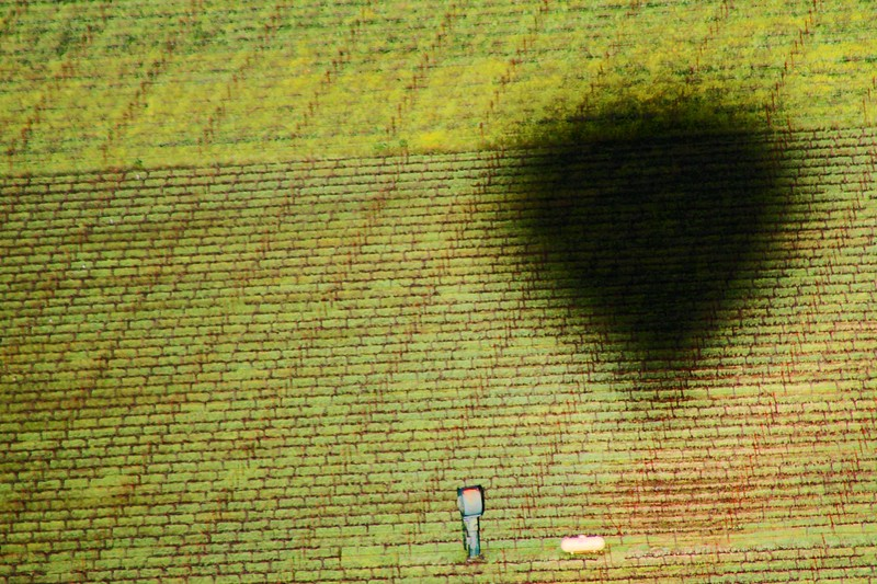 """Shadow of the Balloon"" - Early Spring in the Napa and Alexander Valleys - Some views from aloft a Hot Air Balloon, others among the pruned vines just at bud break. The valley floor, afire in floral Mustard and wild flowers is a wonderful palate before the lens. This is truly God's country."