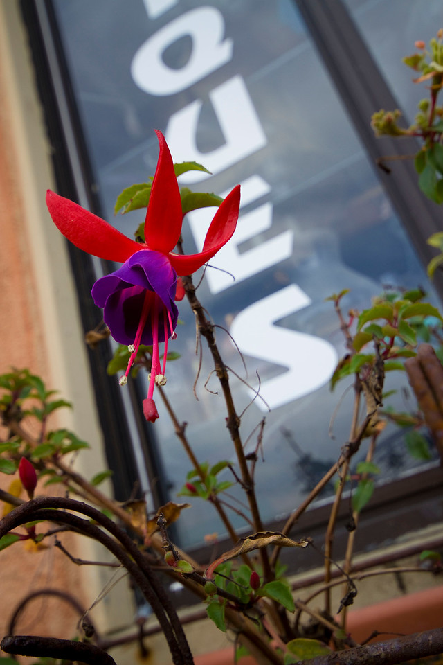 Flowers at the window, Half Moon Bay, California