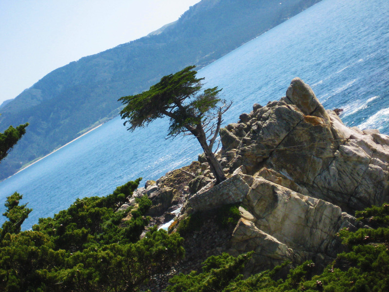 """Lone Cypress"" - Seventeen Mile Drive, Carmel - Canon Elph"