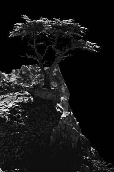 """The Lone Cypress"" - Seventeen Mile Drive, Carmel, California - Infrared Rendering -"