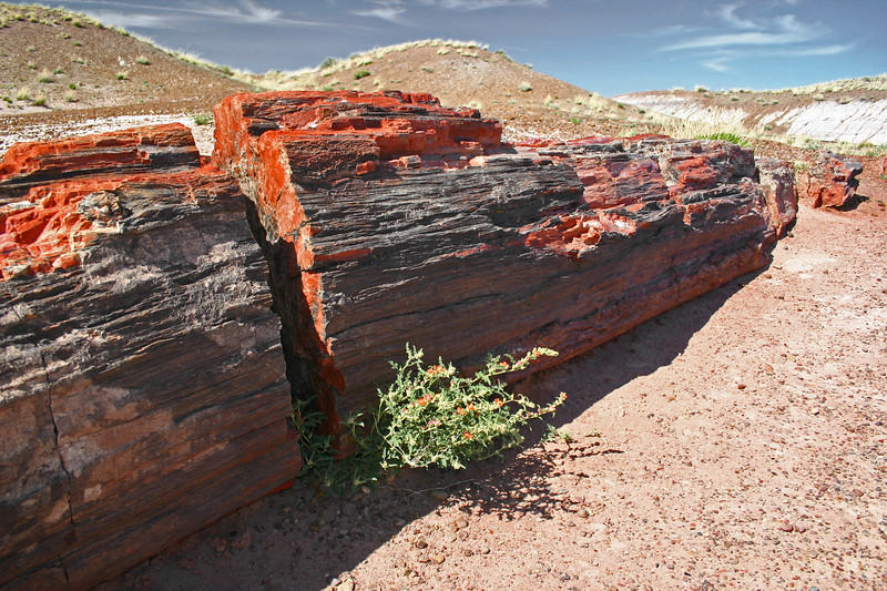 Petrified Forest, Arizona The Painted Desert and the Petrified Forest, Arizona