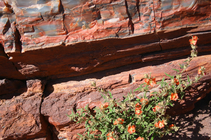 The Painted Desert and the Petrified Forest, Arizona