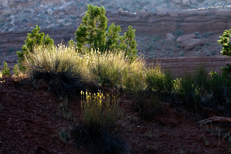 """Still Life - Mystery Valley, Navajo Tribal Park, Monument Valley, AZ<br /> See More of Arizona & Utah - """"The Southwestern Sun' here: <a href=""""http://smu.gs/RfQCCf"""">http://smu.gs/RfQCCf</a>"""