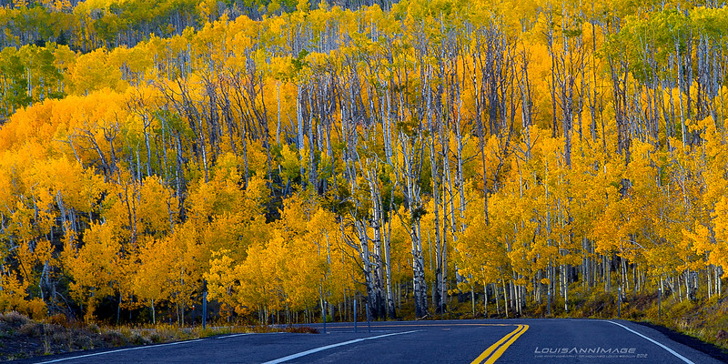 "Aspen Grove, Dixie National Forest, Utah<br /> See More of Arizona & Utah - ""The Southwestern Sun' here: <a href=""http://smu.gs/RfQCCf"">http://smu.gs/RfQCCf</a>"