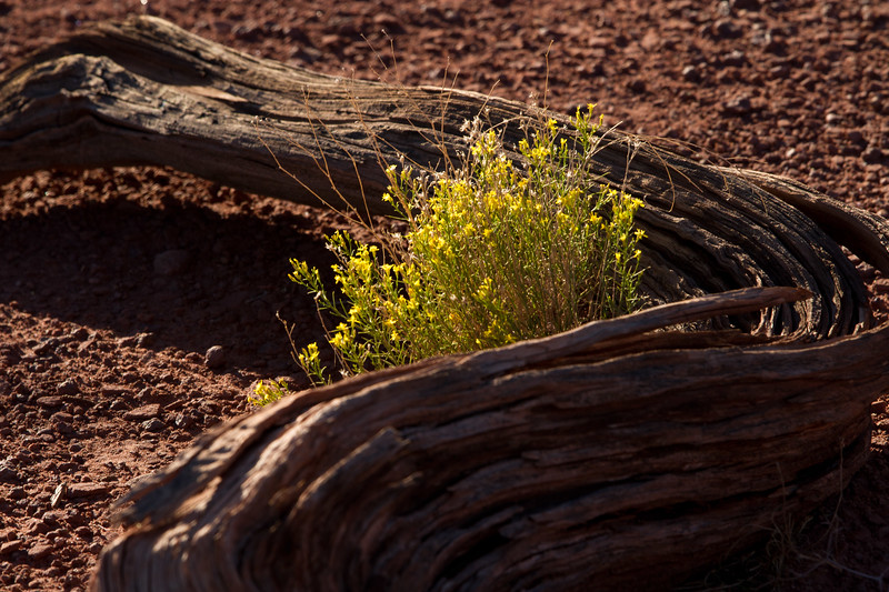 """Details.. Canyonlands NP, UT<br /> See More of Arizona & Utah - """"The Southwestern Sun' here: <a href=""""http://smu.gs/RfQCCf"""">http://smu.gs/RfQCCf</a>"""