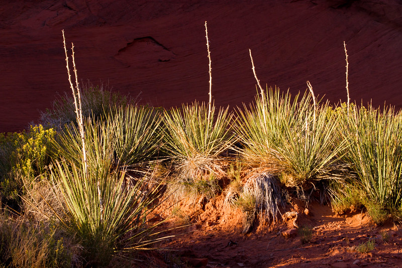 "Still Life - Mystery Valley, Navajo Tribal Park, Monument Valley, AZ<br /> See More of Arizona & Utah - ""The Southwestern Sun' here: <a href=""http://smu.gs/RfQCCf"">http://smu.gs/RfQCCf</a>"