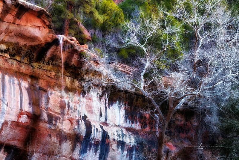 Desert Varnish - Face of Lower Emerald Pools Falls, Zion National Park, Utah
