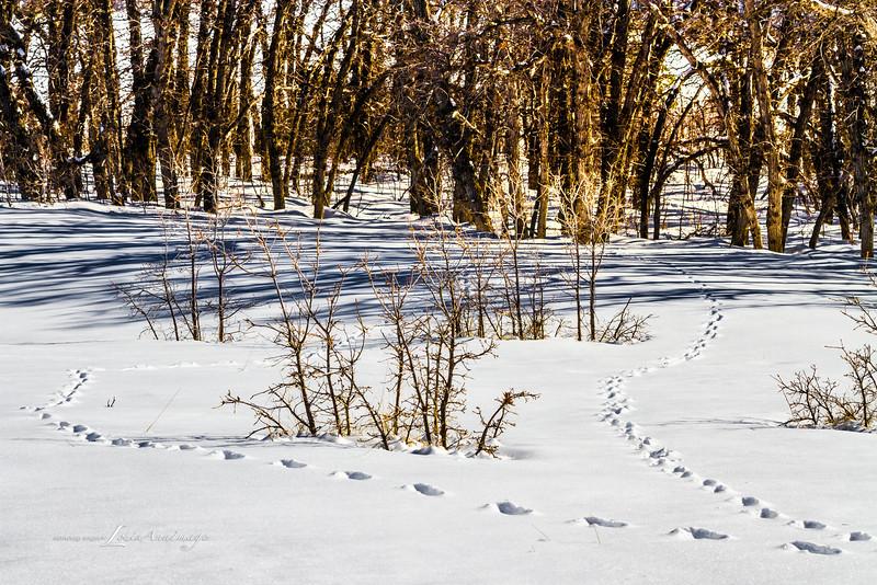 Life Thrives in Winter -- Kolob Terrace, Zion National Park, Utah